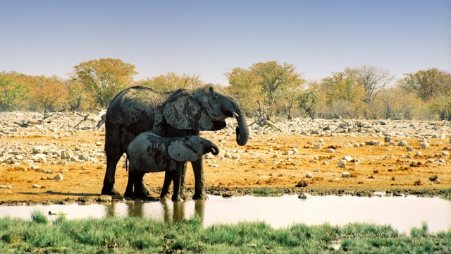 Namibia elefanti al Etosha National Park