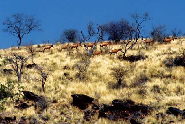 Namibia paesaggio nel damaraland