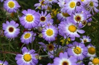 Western Australia Wildflowers season