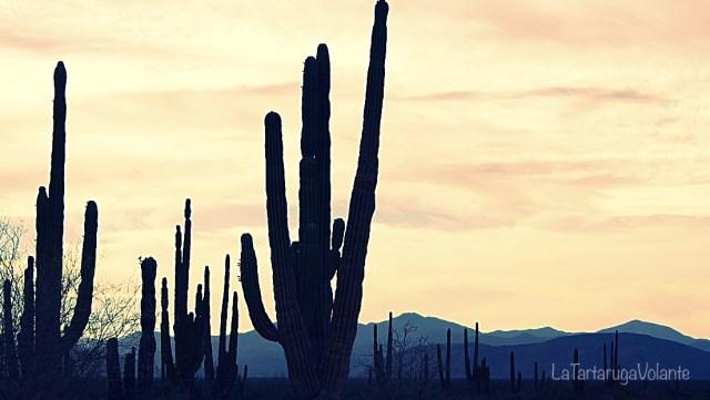 baja california deserto e cactus