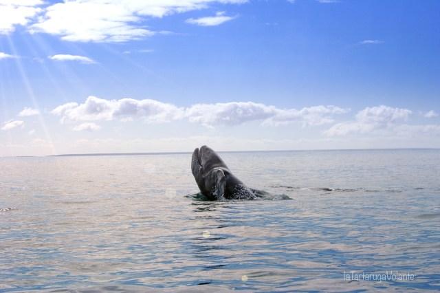 baja california e l'incanto delle balene