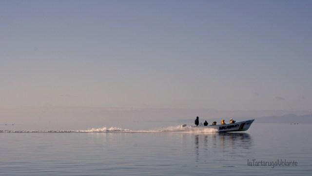 baja california in barca alla ricerca delle balene