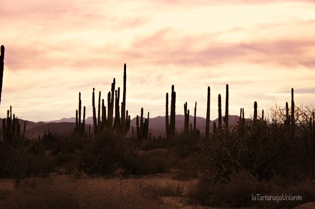 baja california e cactus