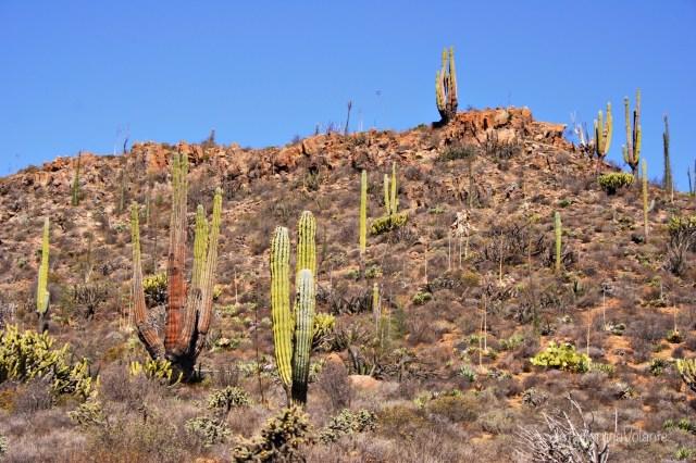 baja california deserto