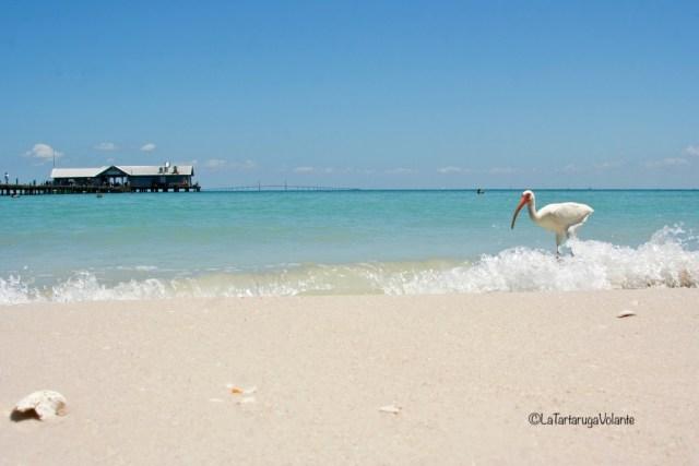 Florida, spiaggia a Maria Island