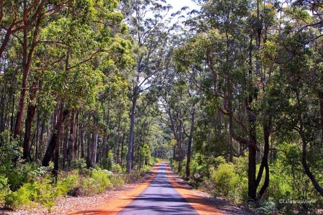 western australia sud strada nella foresta
