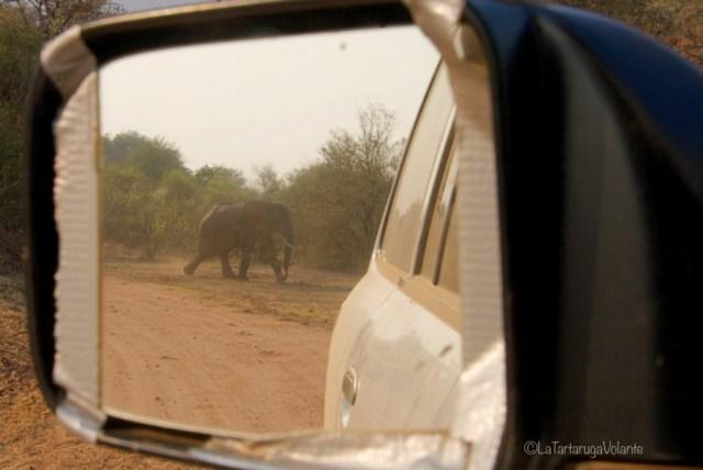 Zambia, elefante vicino vicino