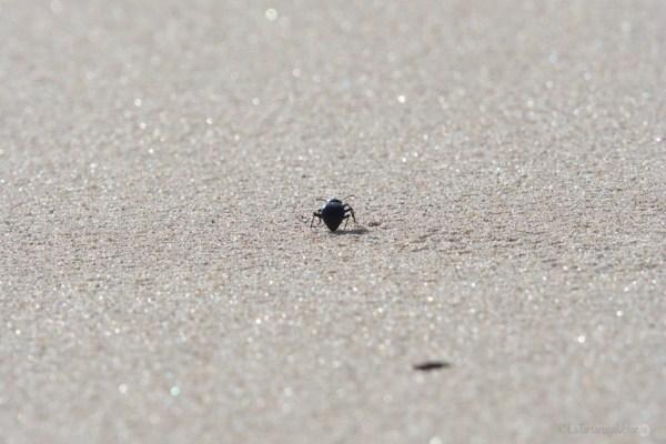 Doñana, bug