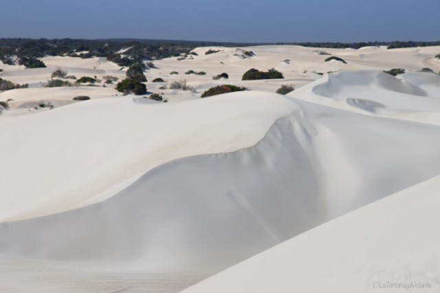 deserto dei pinnacoli, dune all orizzonte