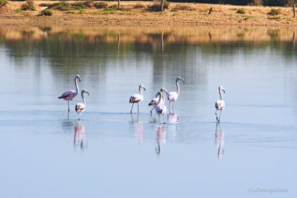 viaggio a Doñana, fenicotteri
