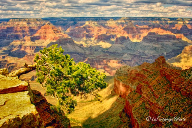arizona,grand canyon albero