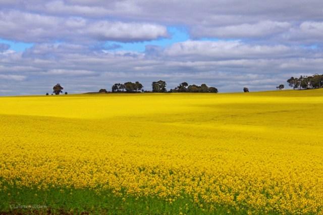 cosa vedere a perth, campi gialli