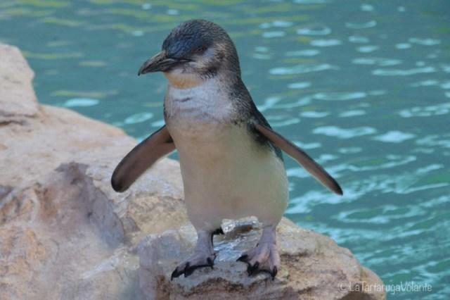 Viaggi dei sogni, pinguino WA