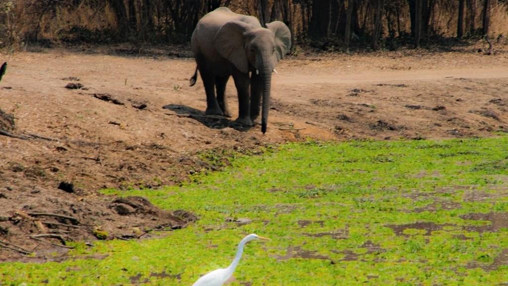 Volontariato, elefanti