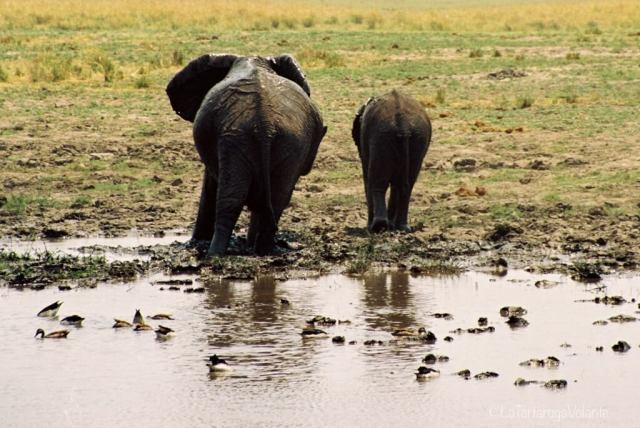 Botswana, elefanti nel Okavango