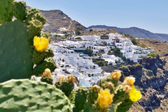 Santorini e i fiori del cactus
