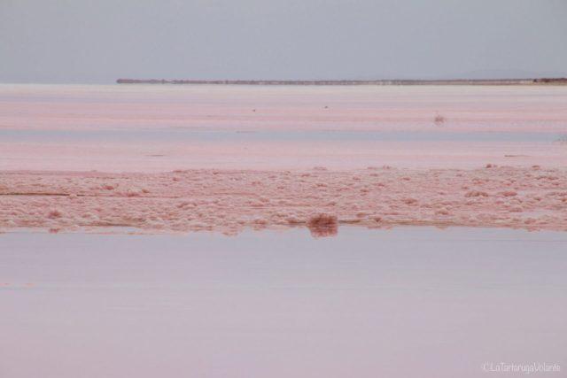 Hutt lagoon, particolare vicino alla fabbrica