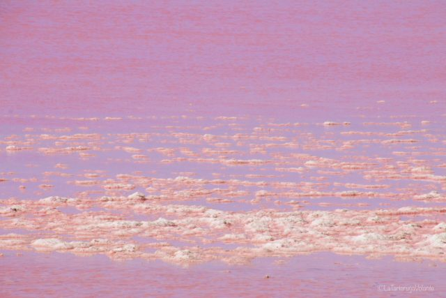 Hutt lagoon, rosa e rosa
