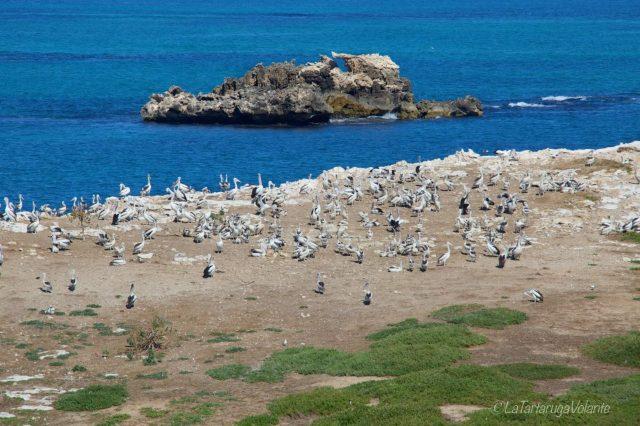 penguin island e i suoi uccelli