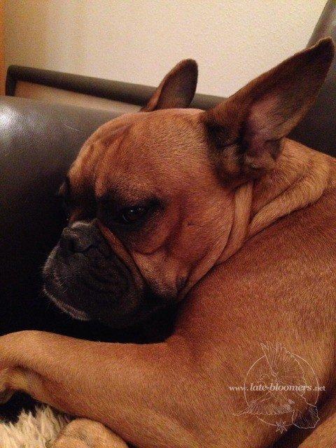 Roco schläft in seinen Geburtstag hinein