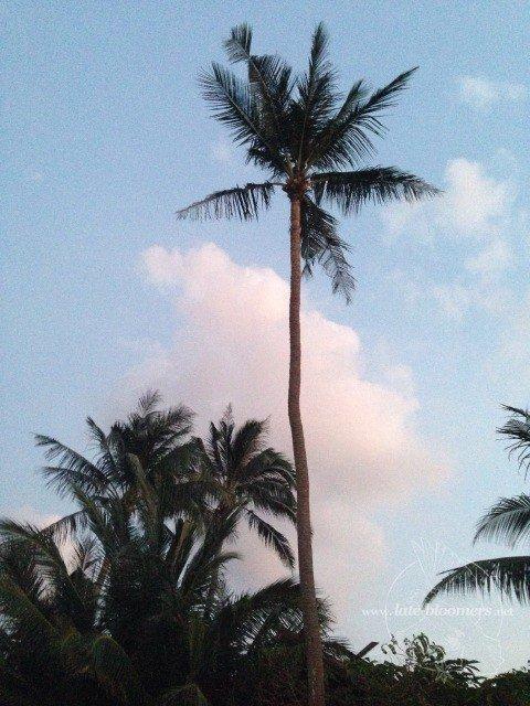 Palmen am Strand von Koh Samui