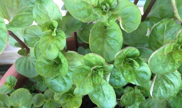 Late Bloomers Winterfrüchte Smoothie