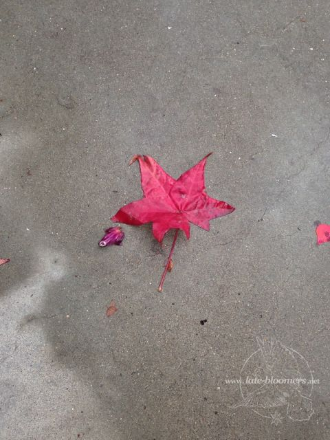 LB red leaf on floor