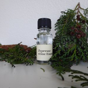 Late Bloomers essential oil cypress
