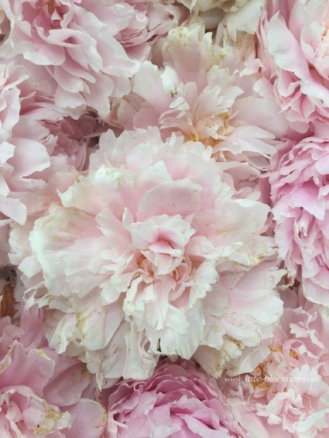 Late Bloomers Wordless Wednesday
