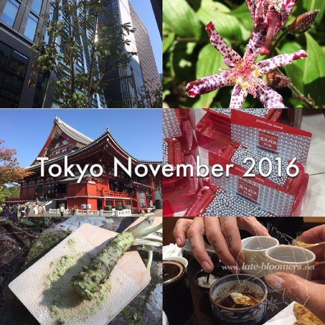 2016 in pictures: November Japan