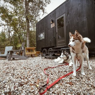 The Getaway House dogs siberian husky - late by lattes