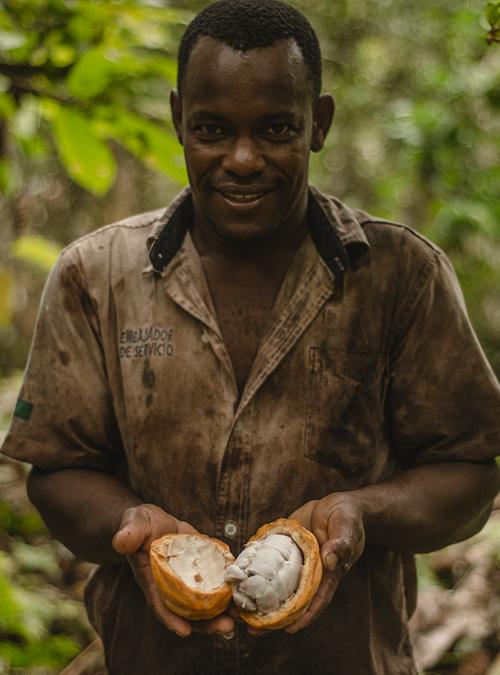 Cacaotero con cacao Late choco
