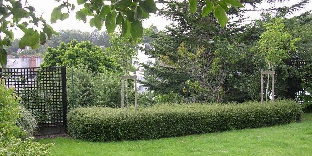 Table végétale de Lonicera magnolia tige et treillage noircis - Table végétale perspective sur la cité des peintres - entretien du jardin et de ses haies