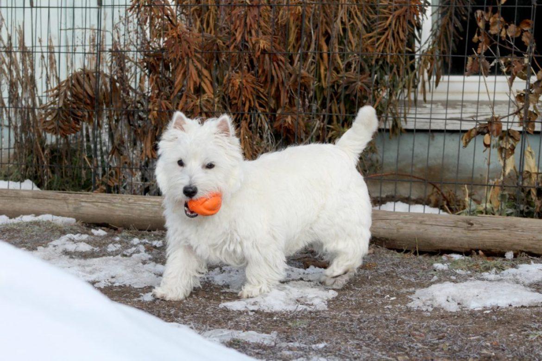 Winter Dog Tips
