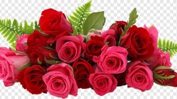 Rose Flower: HD Image – Wallpaper Download