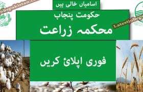 Jobs in a Public Sector Organization Multan 2020