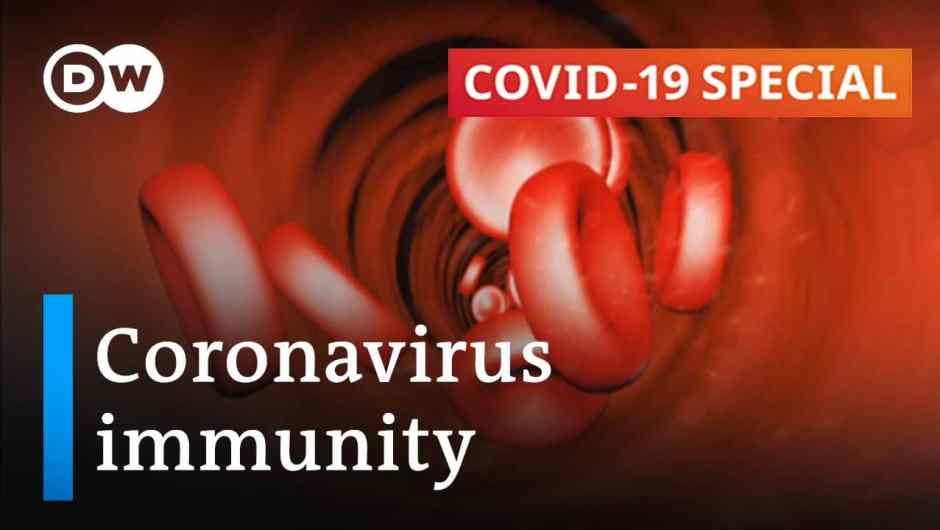 How lengthy does immunity in opposition to the coronavirus final? | COVID-19 Particular