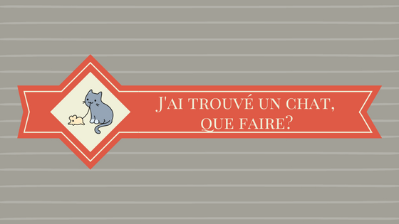 J'ai trouvé un chat, que faire?