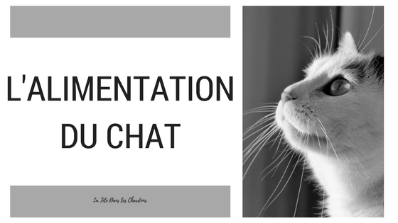 L'alimentation du chat