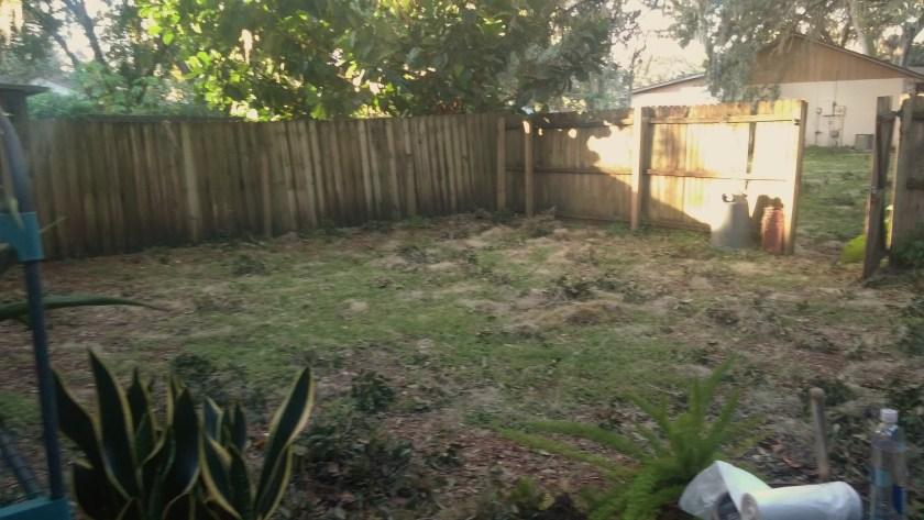 backyard_aftermath