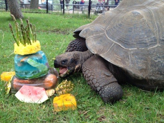 birthdaytortoise
