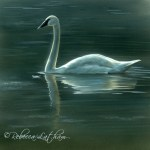 Evening in Indigo - Trumpeter Swan, 5.5in x 5.5in, watercolor on board, ©Rebecca Latham