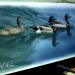 "Mallards in Progress, ~ 9"" x 22"", watercolor wash on board, ©Rebecca Latham"