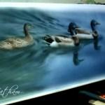 """Mallards in Progress, ~ 9"""" x 22"""", watercolor wash on board, ©Rebecca Latham"""