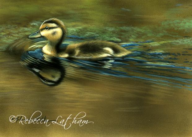painting for spring  u2013 mallard duckling