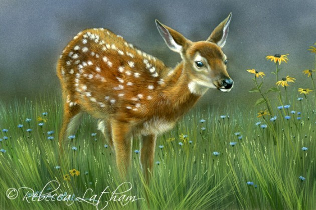 "Wildflower Meadow - Whitetail Fawn, 5"" x 7"", watercolor on board, ©Rebecca Latham"