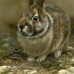 "Mossy Seat - Rabbit, 5""x7"", watercolor on board, ©Rebecca Latham"