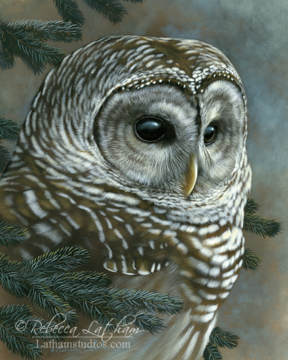 Evergreen Perch - Barred Owl, 8in x 10in, opaque and transparent watercolor with sterling silver and 24kt gold on board, ©Rebecca Latham
