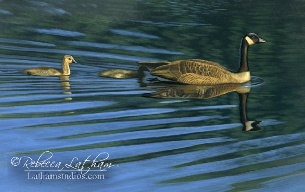 Pond Crossing - Canada Geese,  Opaque & transparent watercolor with sterling silver on board, 6in x 8in, ©Rebecca Latham