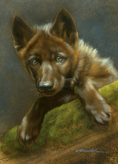 """Curious Pause - Wolf Pup, watercolor on board with sterling silver, 6"""" x 8"""""""